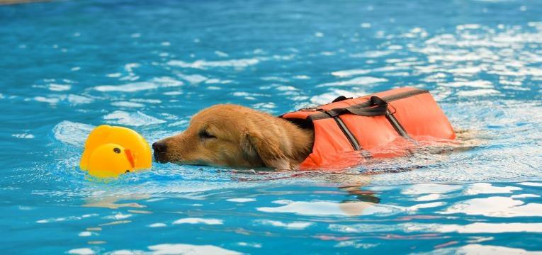 Raças de cães que não conseguem nadar