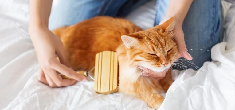 escovar o gato