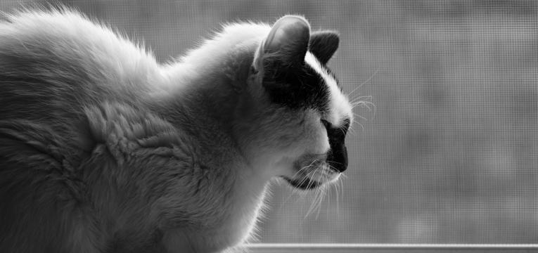 coisas que irritam profundamente o seu gato