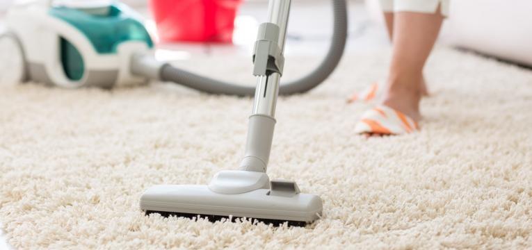 pulgas em gatos limpeza de carpetes