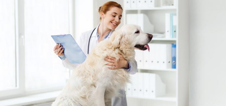 gravidez psicologica em cadelas veterinaria com cadela