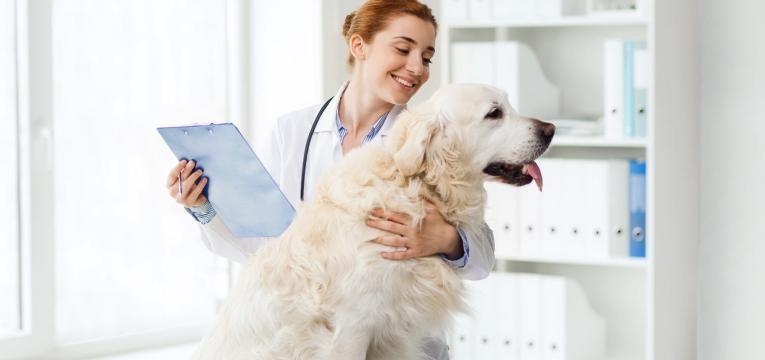 vitiligo em caes cao no veterinario