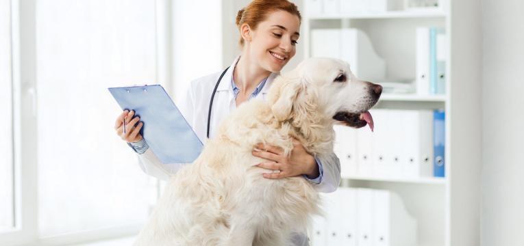 prisao de ventre em caes veterinaria a examinar cao