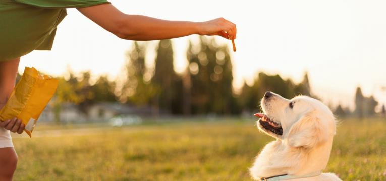 treino com reforco positivo dar biscoito a cao