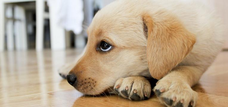 dermatofitose em animais cao abatido