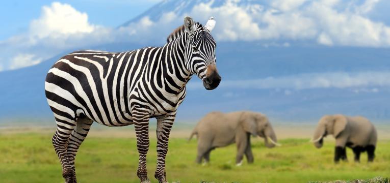 melhores destinos para lua de mel Nairobi