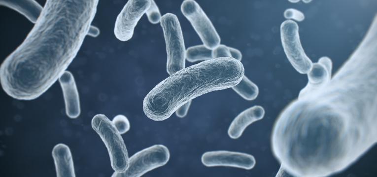 saliva de caes e gatos pode ser perigosa para a saude E. coli