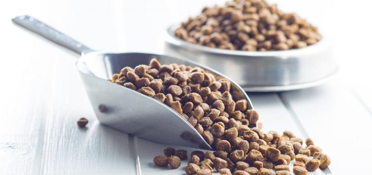 gripe felina comida seca gato
