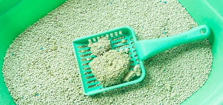qual a melhor areia para gato areia aglomerante