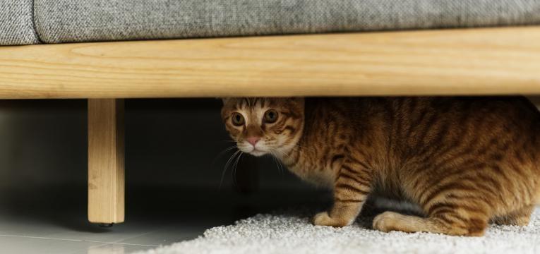 sinais de alarme no animal gato isolado