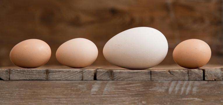tipo de ovos tamanho dos ovos
