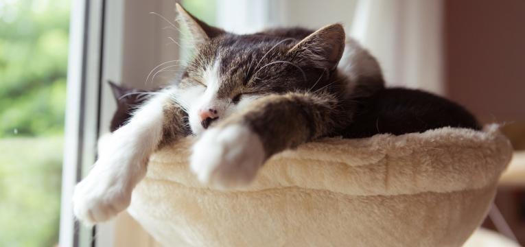 gripe felina gato relaxado