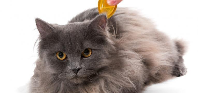 pulgas em gatos pipeta desparazitante