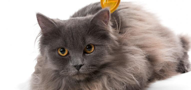 vai ter um bebe desparasitar gato