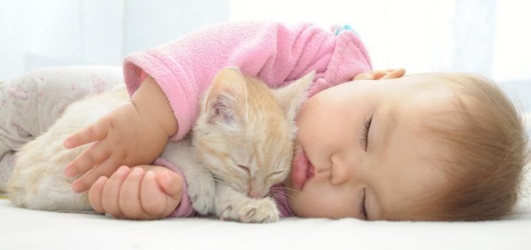 gatos e criancas bebe a dormir com gato