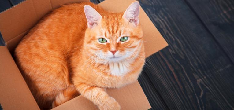 porque e que os gatos adoram caixas gato deitado