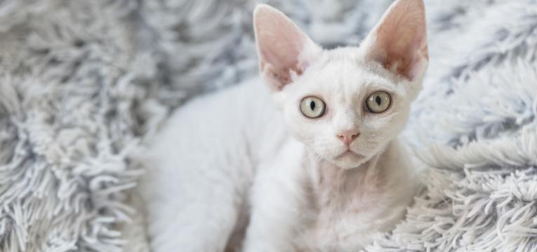 sensibilidade digestiva nos gatos gato magro