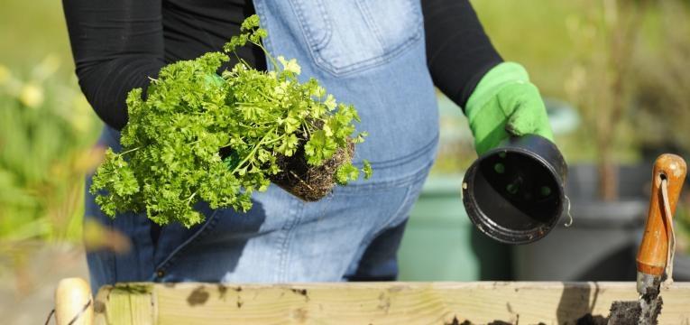 Toxoplasmose e gravidas jardinagem com luvas