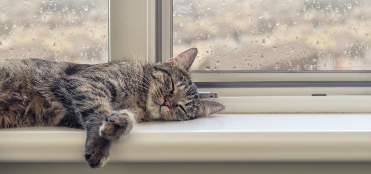 Toxoplasmose e gravidas gato a janela a dormir