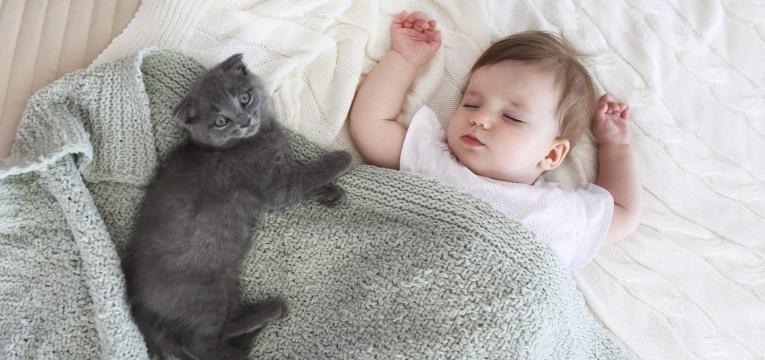 relacionar o bebe e o gato e gato na cama