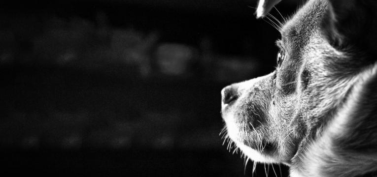 como lidar com a perda de um cao olhar profundo de animal
