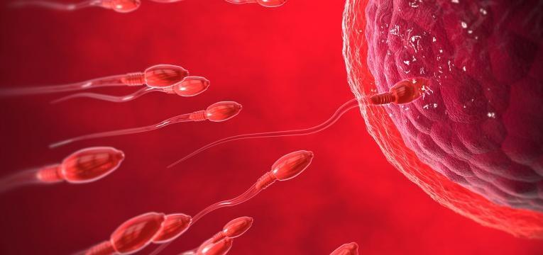 ovulacao ocorre a fecundacao espermatozoides