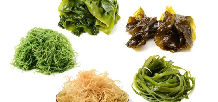 algas macroalgas diferentes