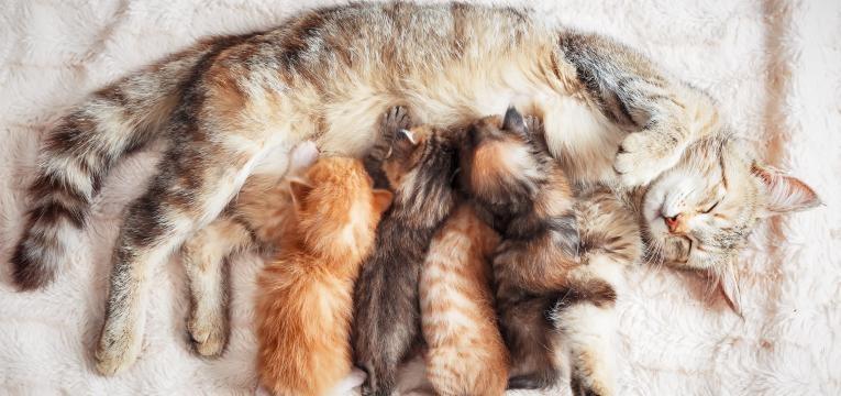 leucemia felina gata mae e bebes