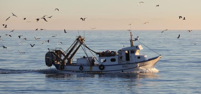 peixe fresco pesca em alto mar