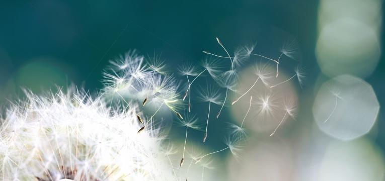 angioedema polen