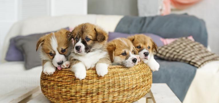 cuidados a ter com uma cadela gravida cachorros bebes