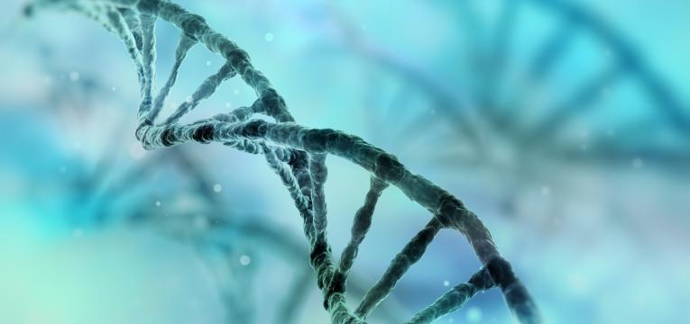 alopecia ADN
