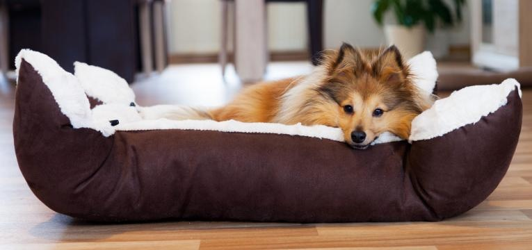 cao nao deve dormir na cama dos donos cama do cao