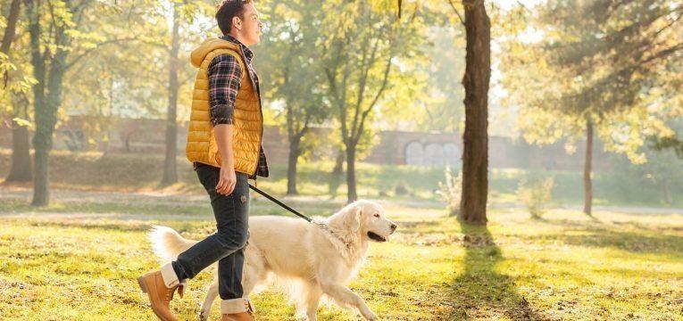 cuidar do cao em idade avancada dono a passear com cao