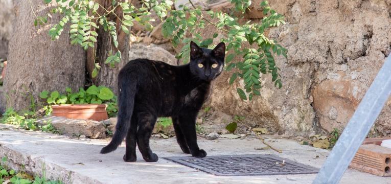 Virus da Imunodeficiencia Felina gato magro