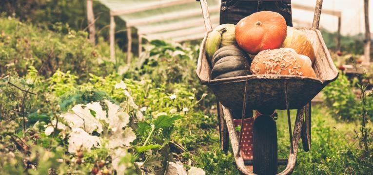 produtos agricultura biologica
