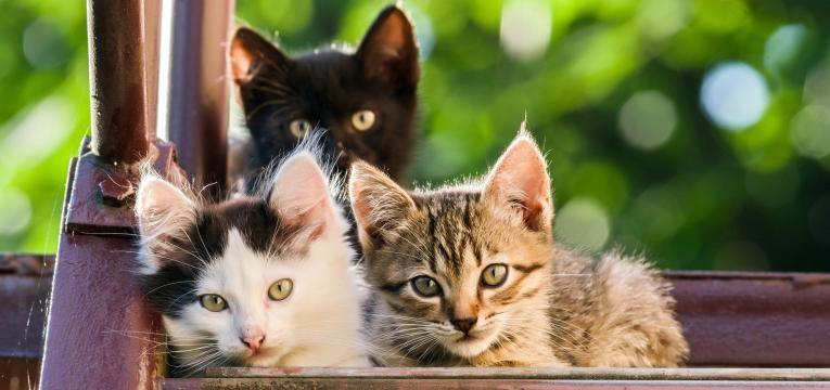gripe felina gatos juntos