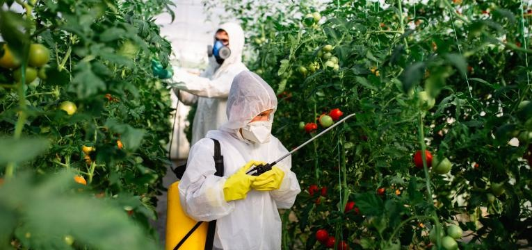 mitos da agricultura biologica toxicidade alimentos