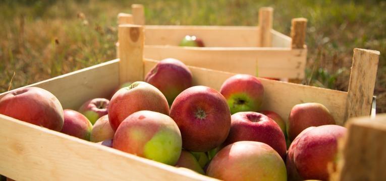 mitos da agricultura biologica maca biologica