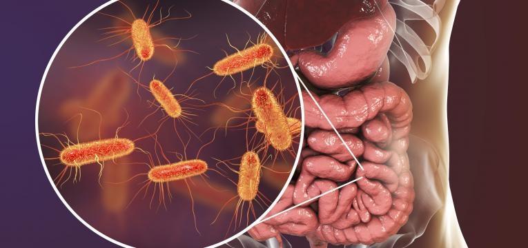 intestino saudavel disbiose
