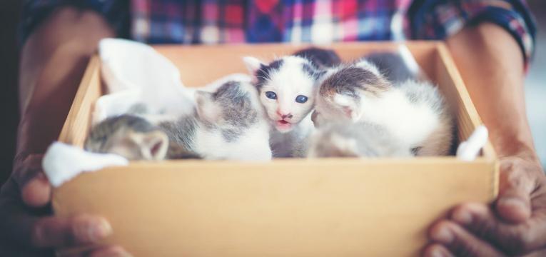 como cuidar de um gato recem-nascido gatinho numa caixa