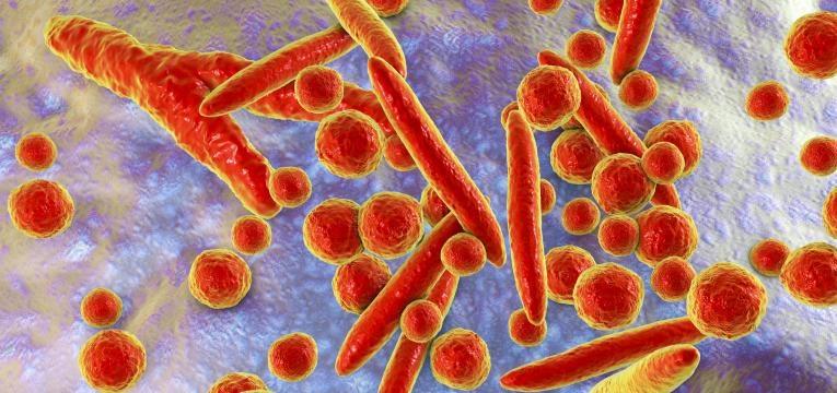 micoplasmose em gatos bacterias