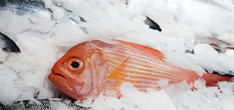 guelras brilhantes peixe