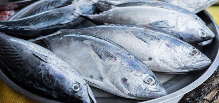 peixe fresco olhos brilhantes