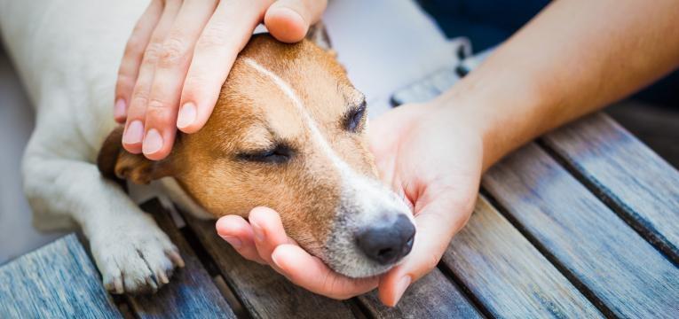 Doenças infeciosas em cães: Doença de Lyme