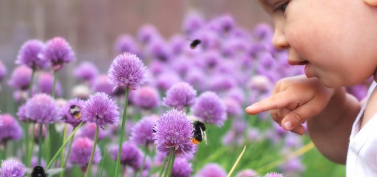 picadas de abelhas menino proximo de abelhas