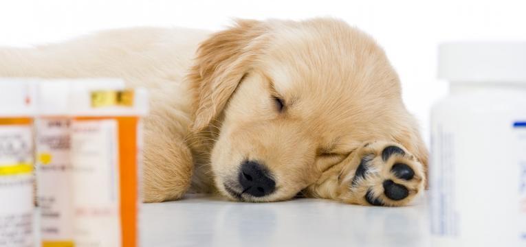 riscos de automedicar o seu animal cao com medicacao perto