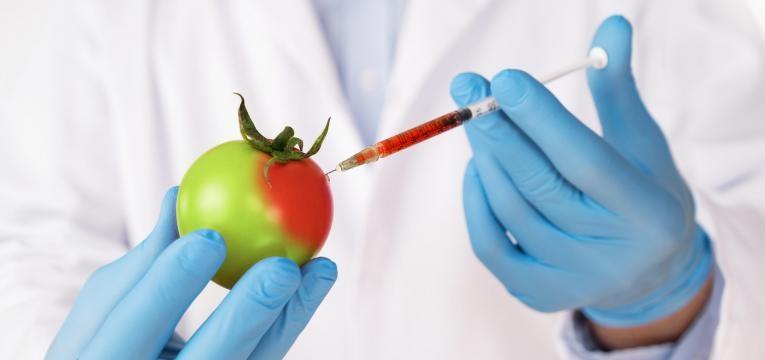 organismos geneticamente modificados alimentos geneticamente modificados