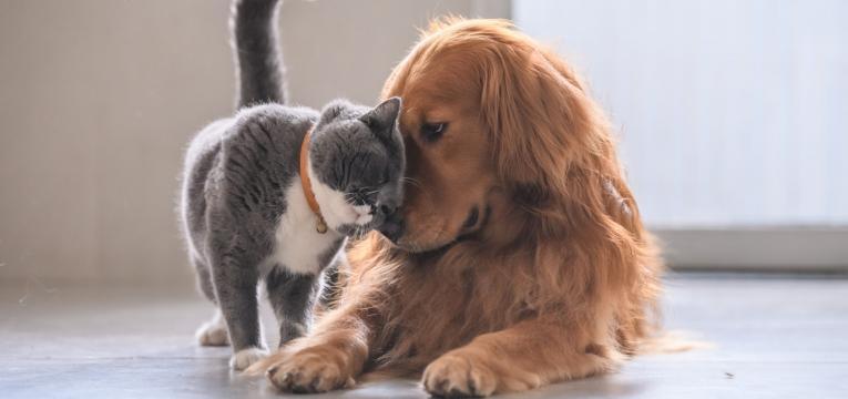 animais em estabelecimentos comerciais cao e gato juntos
