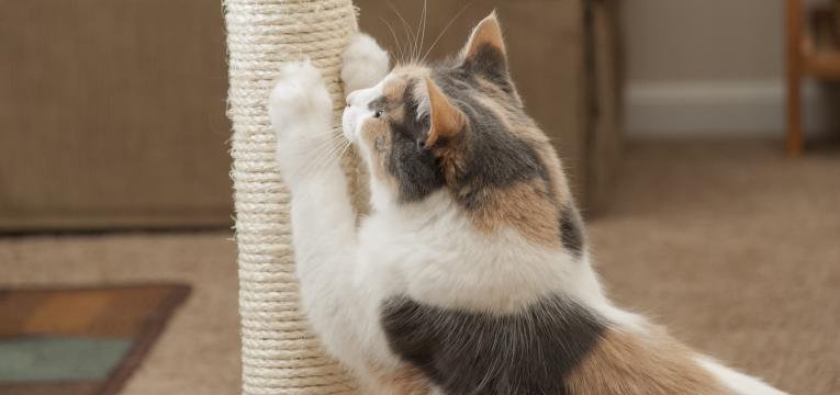 reforco positivo nos gatos gato no arranhador